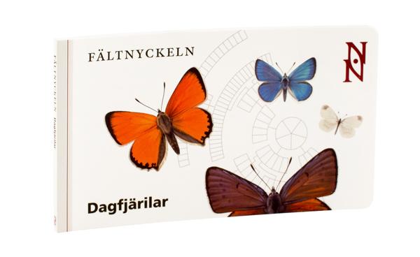 Fältnyckeln Dagfjärilar